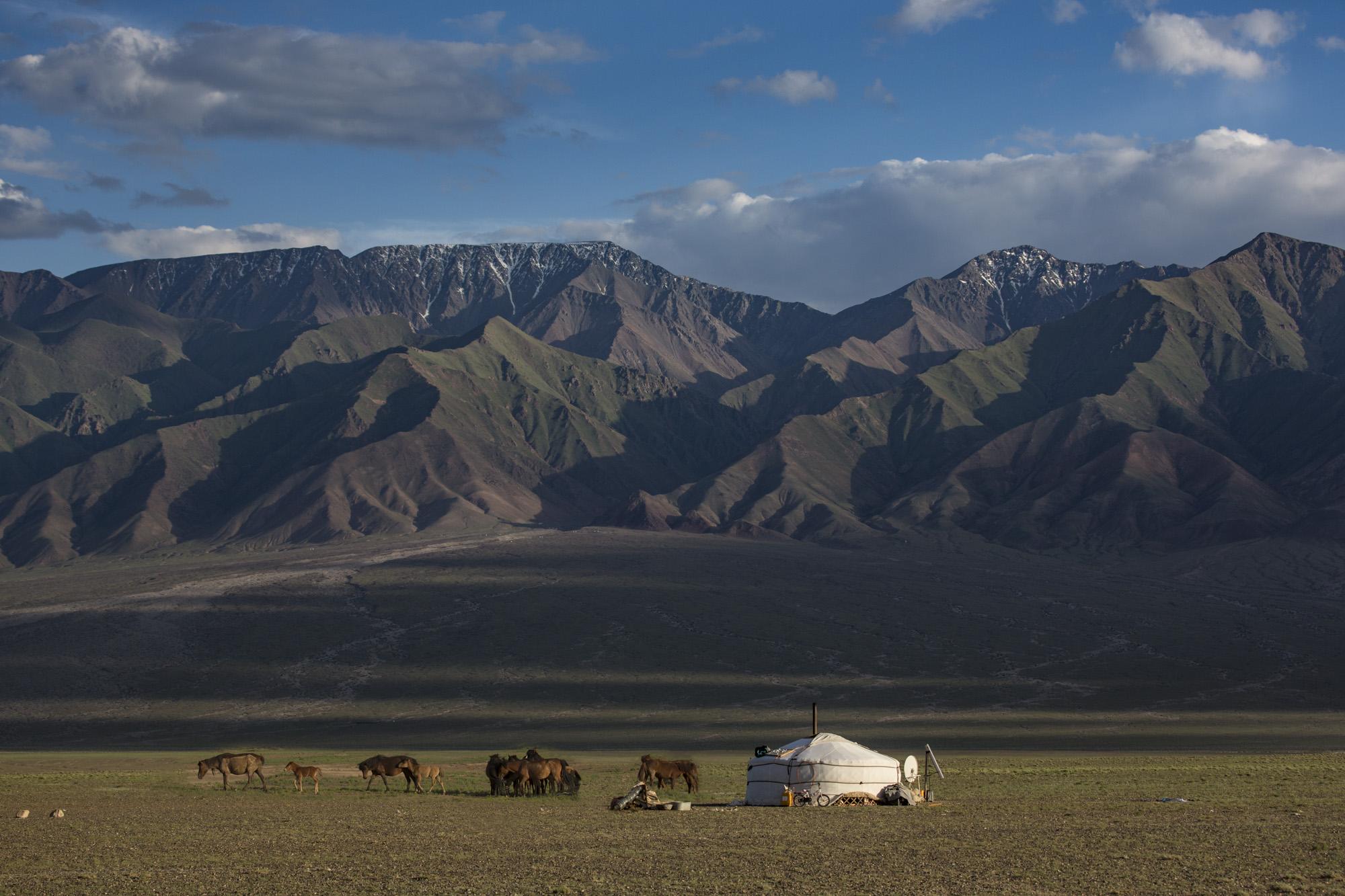 Perde an einer Jurde in der Süd Gobi