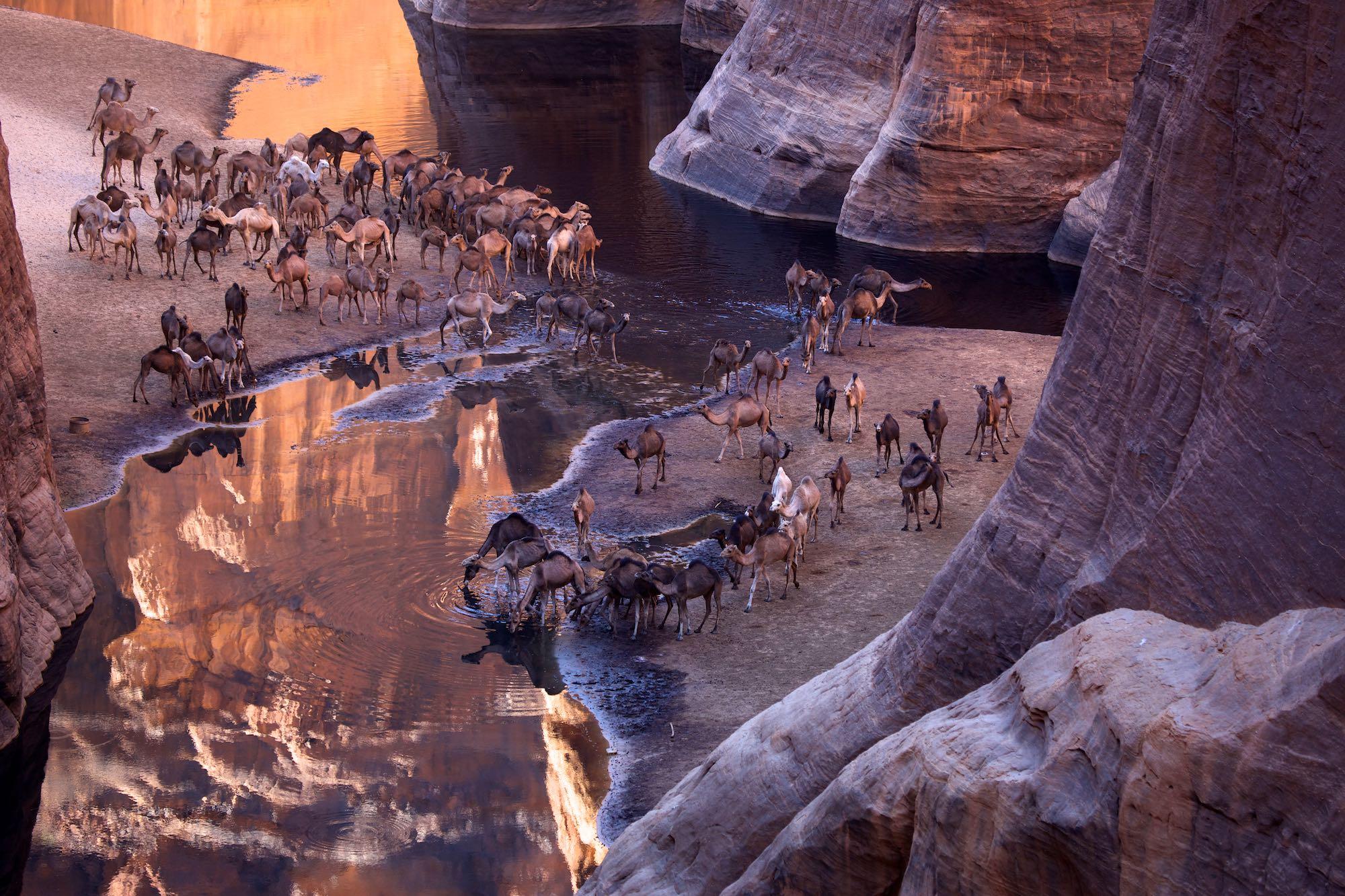 Kamele in der Schlucht von Archei im Ennedigebirge, Tschad, Afrika