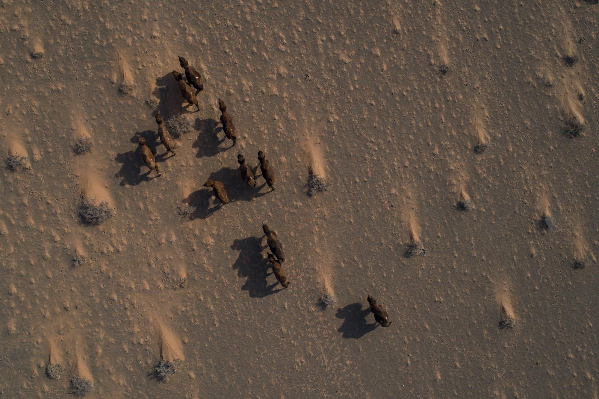 Kamele von oben