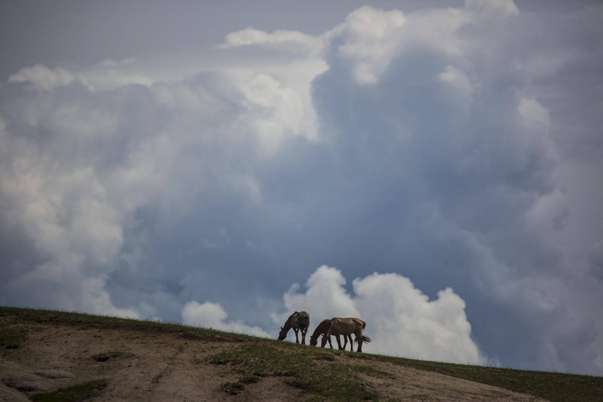 Pferde vor Wolken, Mongolei